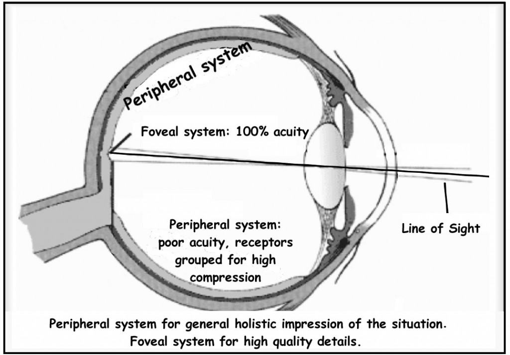 Eye diagram of Foveal and Peripheral systems