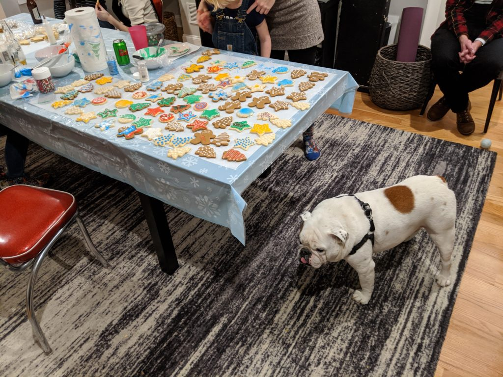 Ziggy the bulldog hovering around a table covered in newly-decorated Christmas cookies